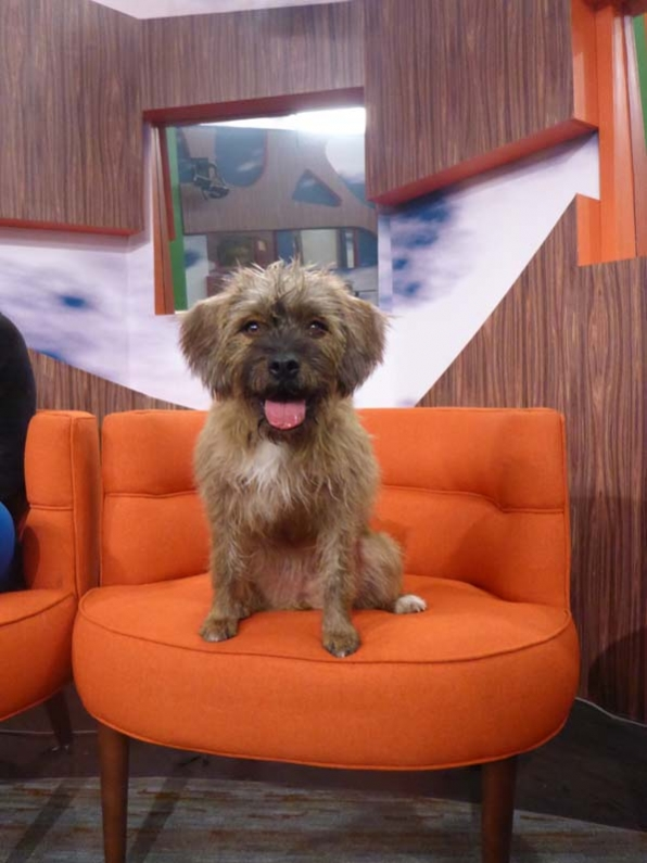 Big Brother 2014 Spoilers – Week 11 HoH Photos 6